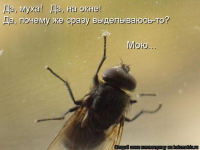 Мудрец и мухи