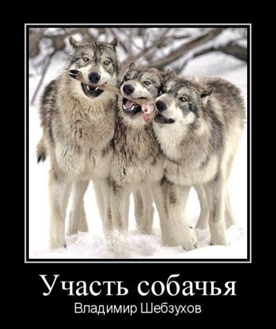 Участь собачья